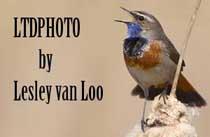 Lesley van Loo Natuur fotograaf